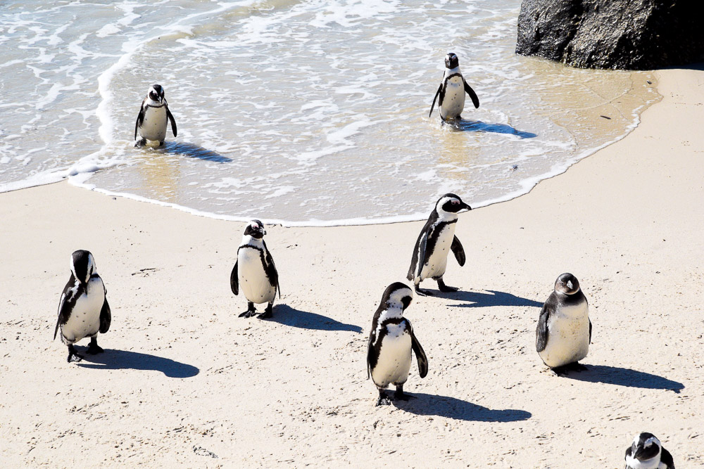 cute penguins on the beach