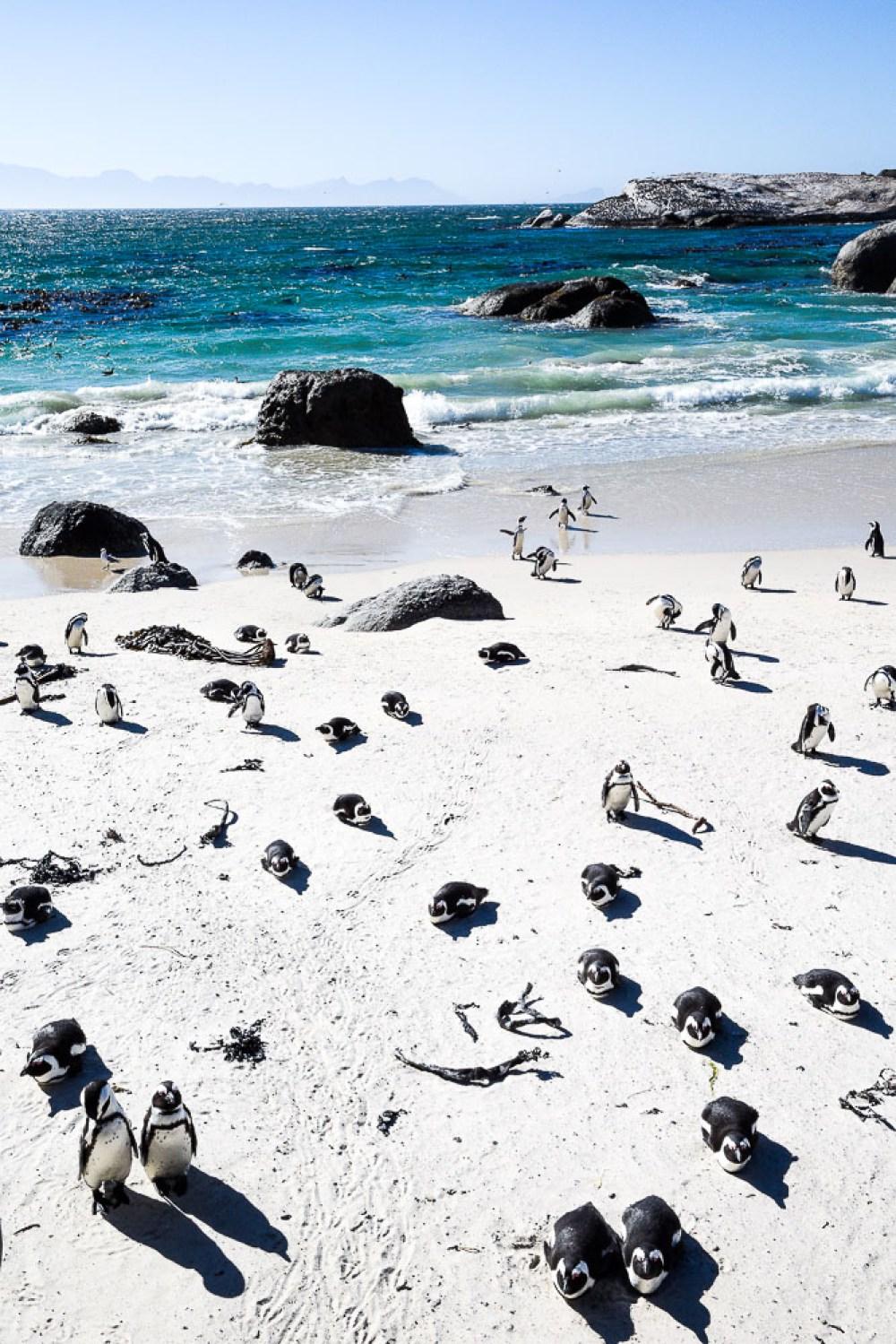 so many penguins!