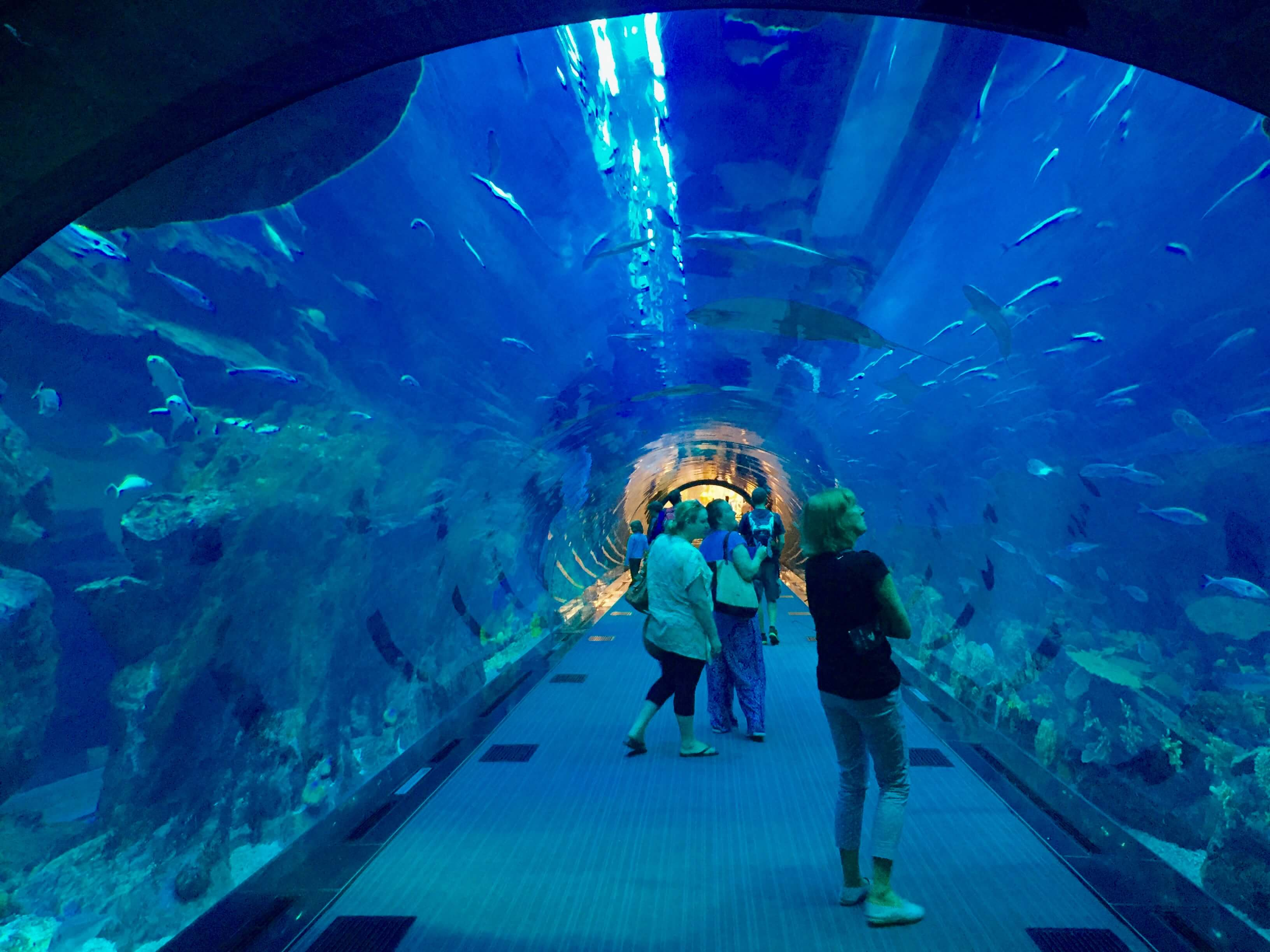 Walking through the aquarium inside dubai mall