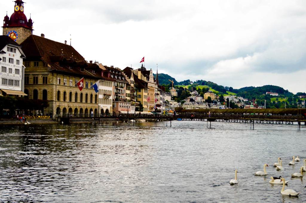 Swans sitting on the lake in Lucerne near the bridge
