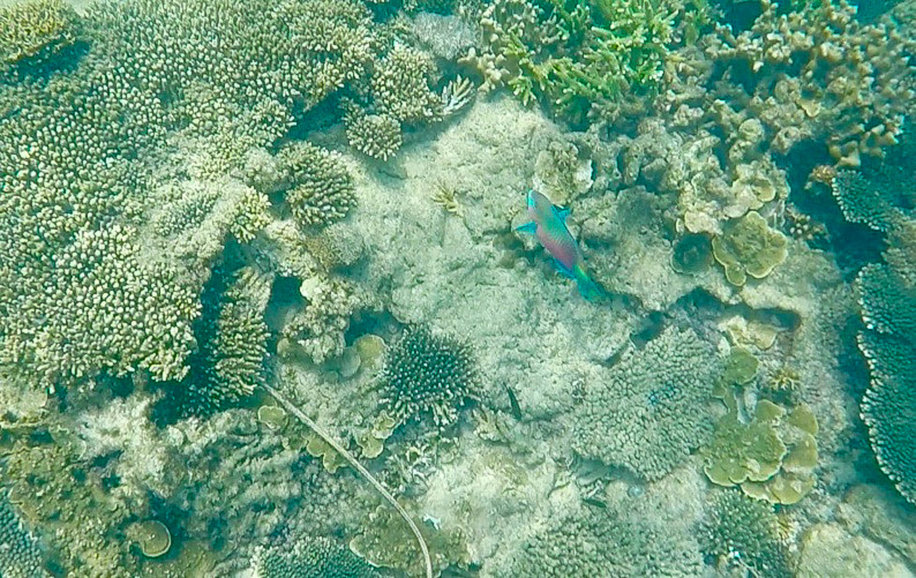 Looking underneath the ocean at a rainbow fish swimming amongst coral