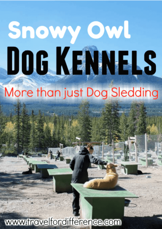 Dog Kennels in the Canadian Rockies with text overlay: Snowy Owl Dog Kennels - More than just Dog Sledding