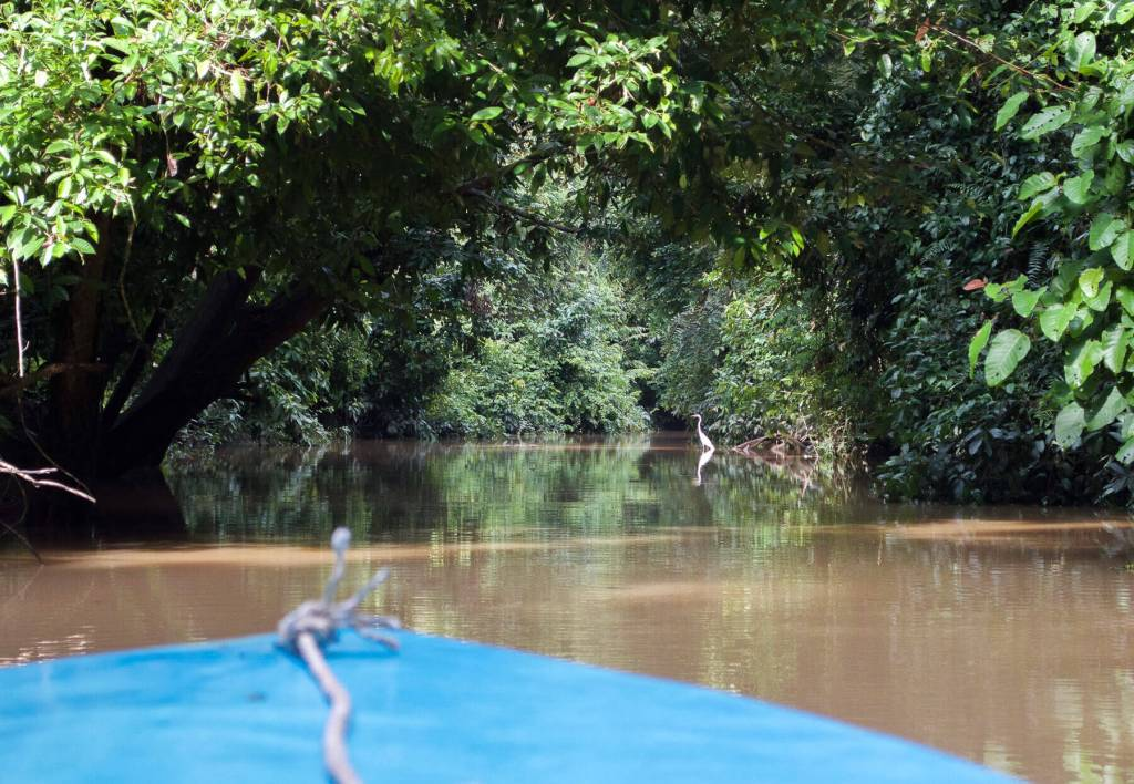 Overlooking front of boat at a Herron sitting in the River