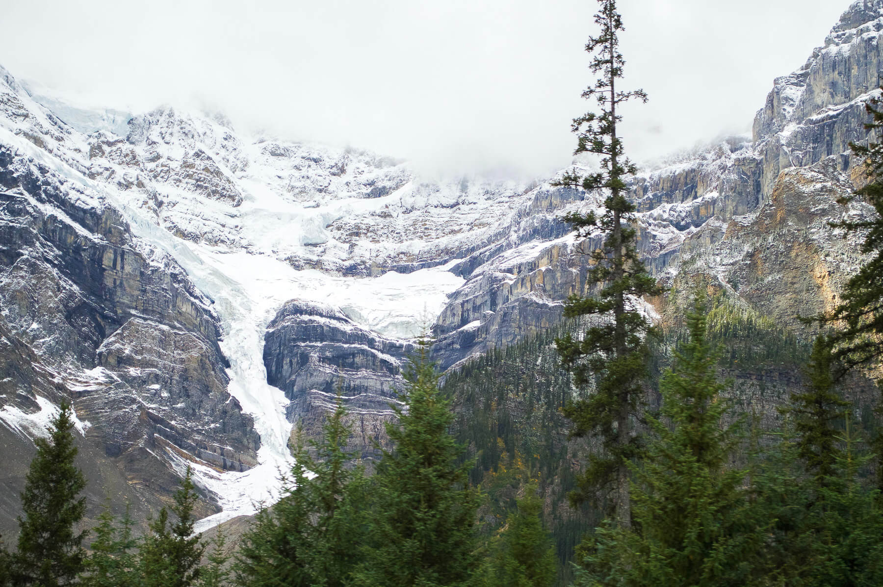 A glacier running down a mountain behind a pine tree