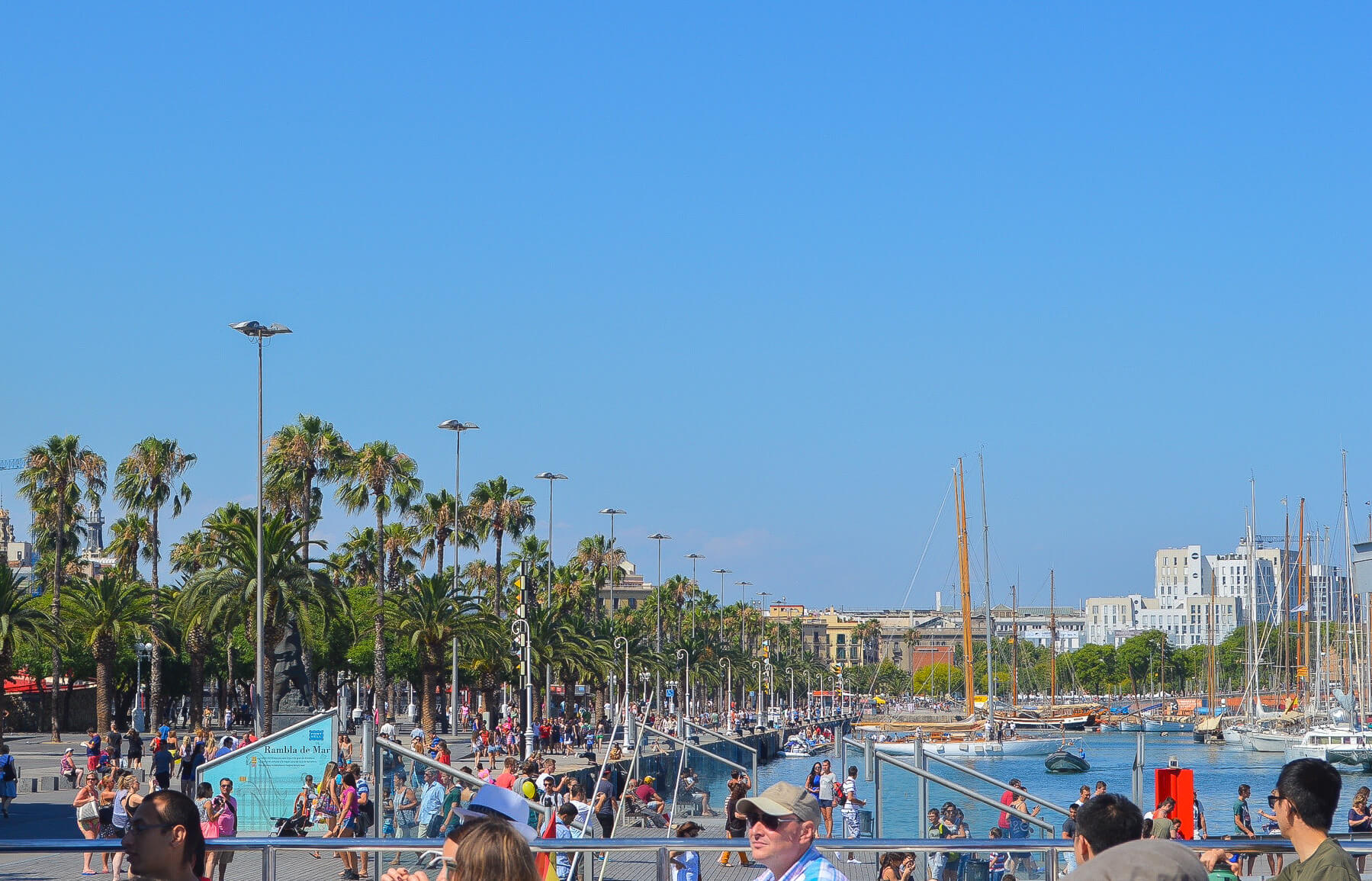 crowds along waterfront near rows of palm trees in city