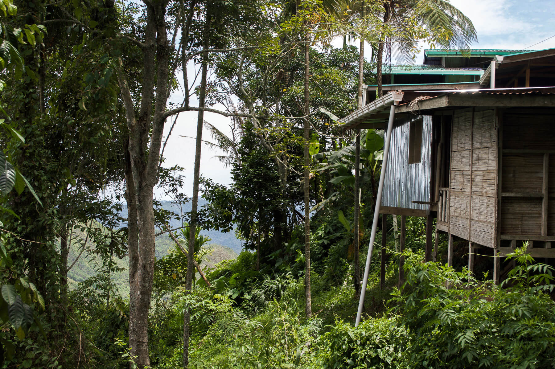 Side view of a house on stilts in the jungle