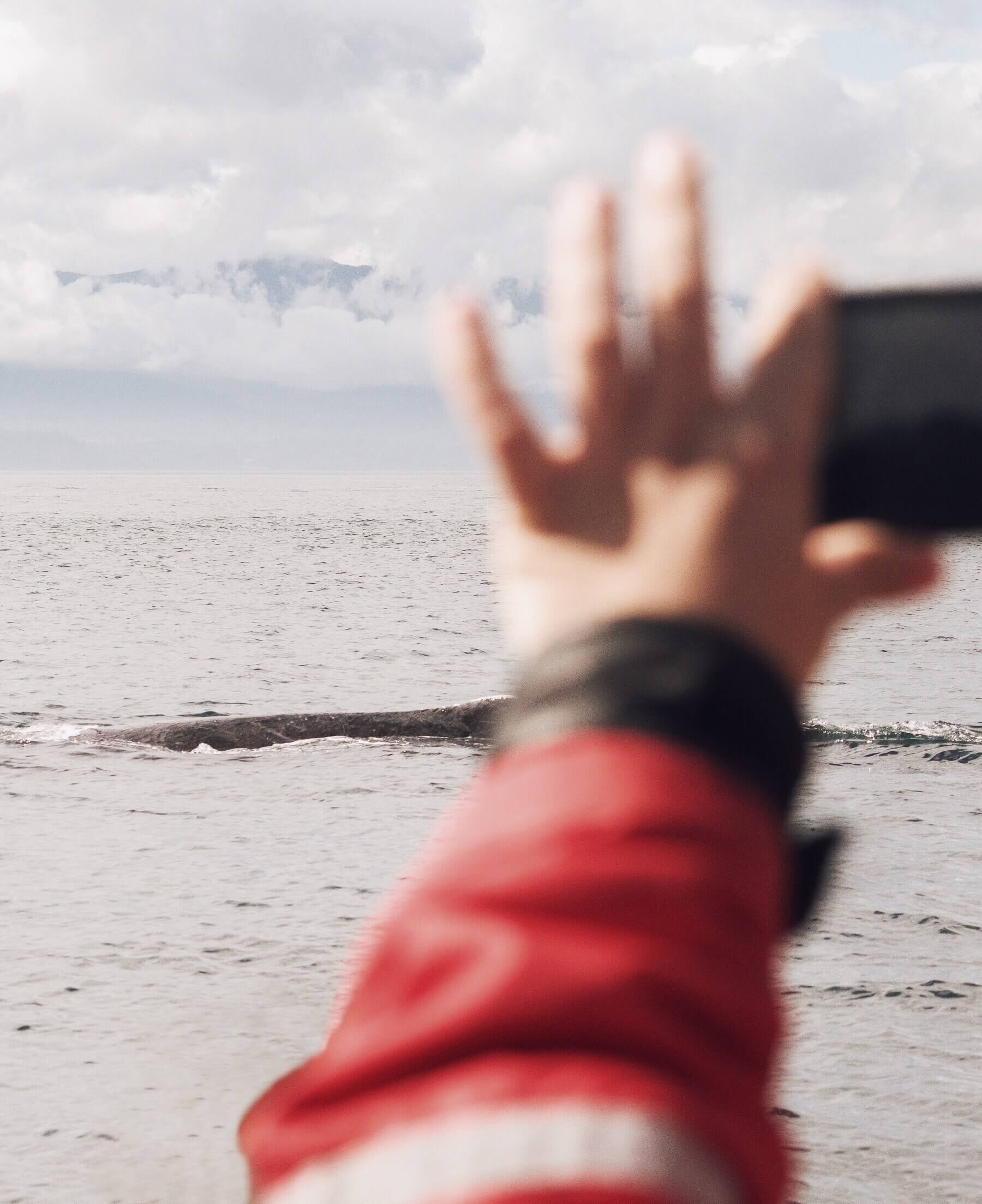 Hand holding a phone up and taking a photo of a whale breaching in the water just a few metres away