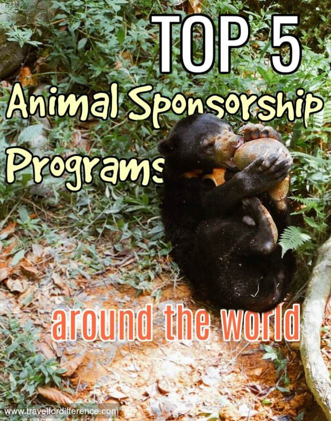 My Top 5 Animal Sponsorship Programs around the World