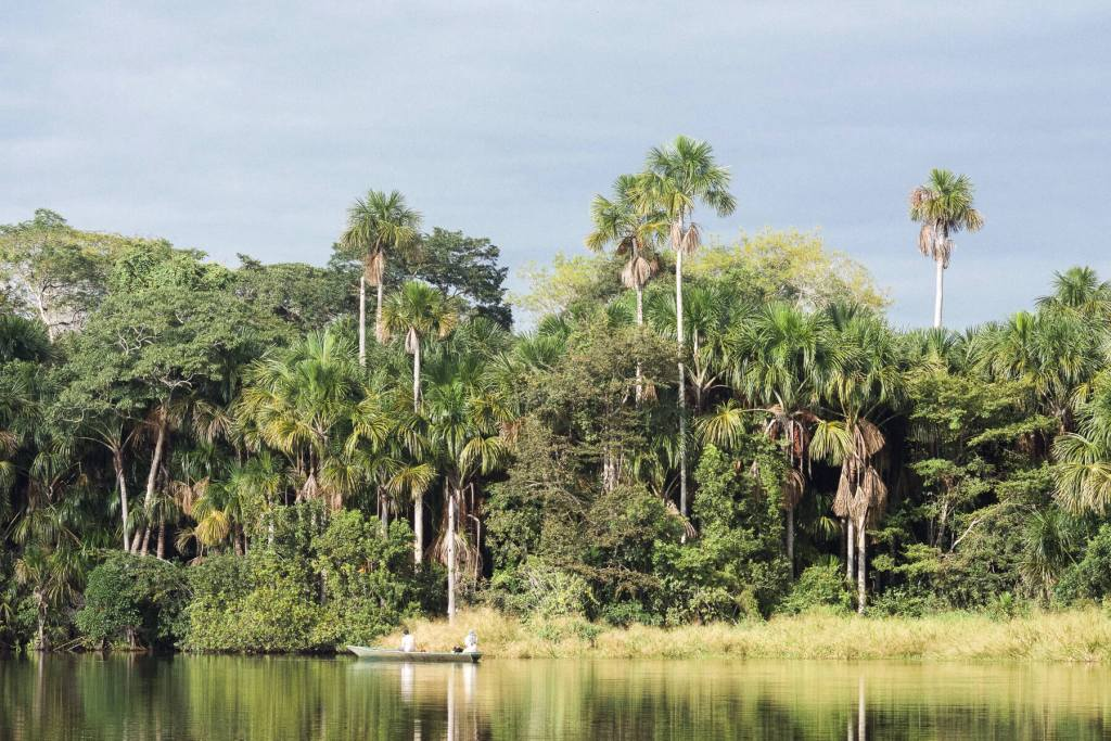Palm trees on the bank of a lake (Lake Sandoval) with a motorboat near the edge