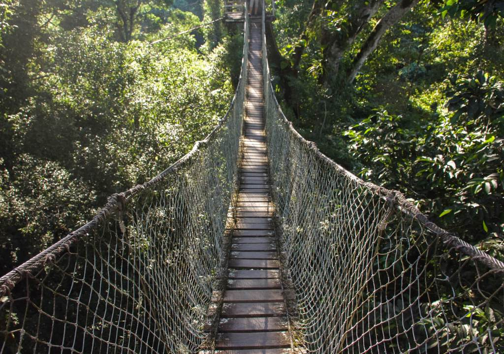 Looking along a rope bridge high in the Amazon Rainforest