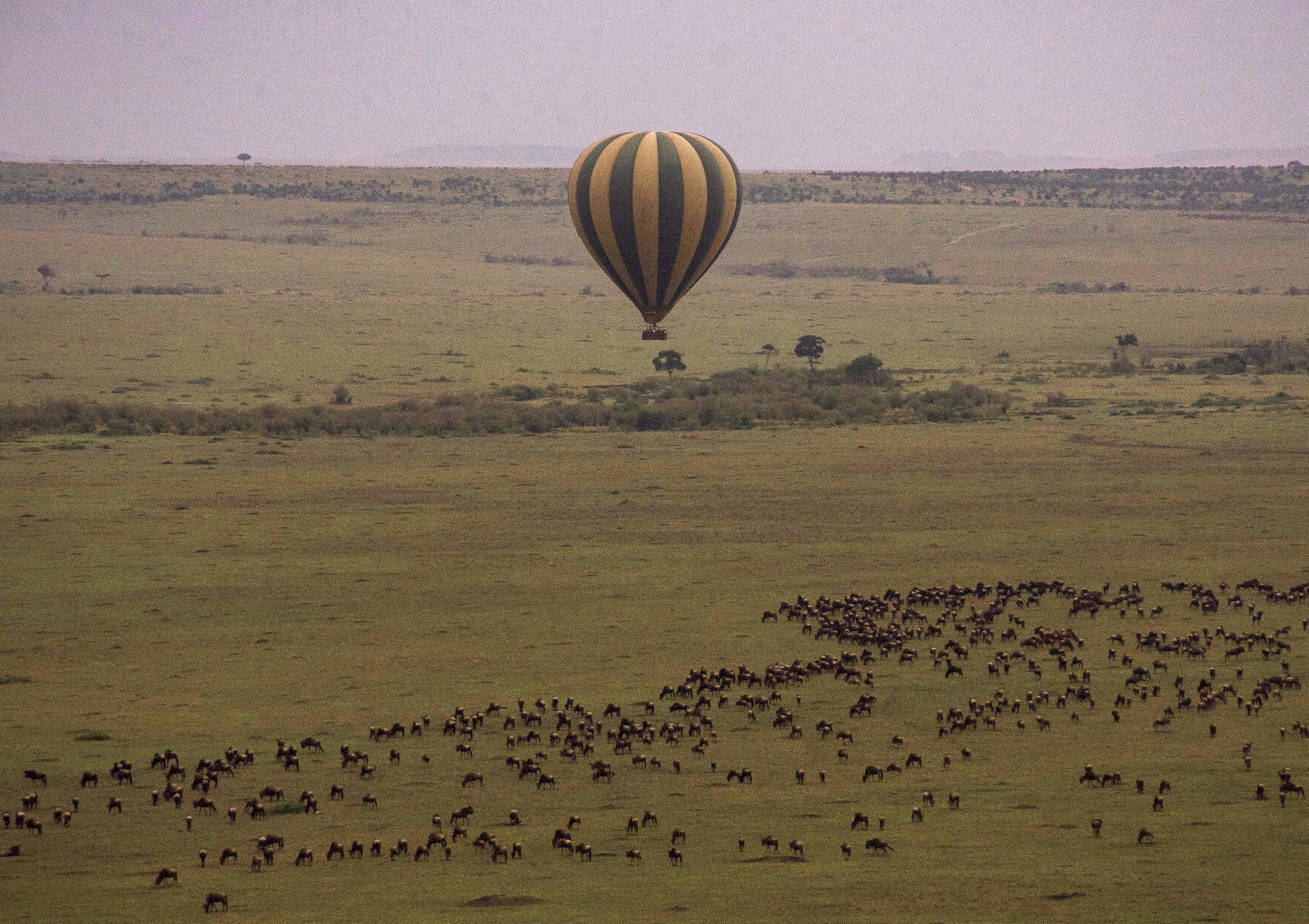 A green and yellow hot air balloon flying low above a huge group of wildebeest during the migration in the Maasai Mara