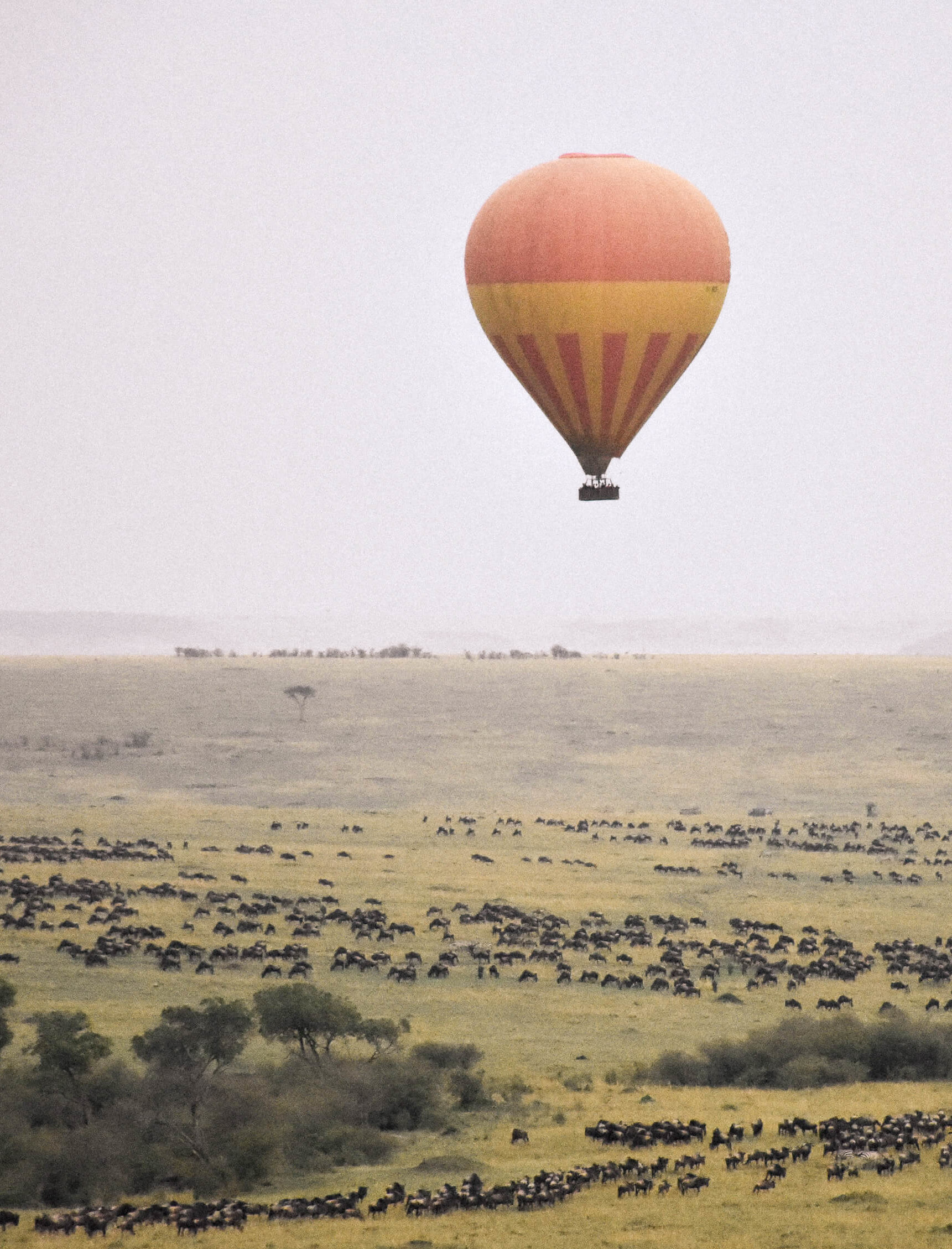 An orange hot air balloon flying above wildebeest as they migrate through the Maasai Mara ( Maasai Mara Balloon Safari )