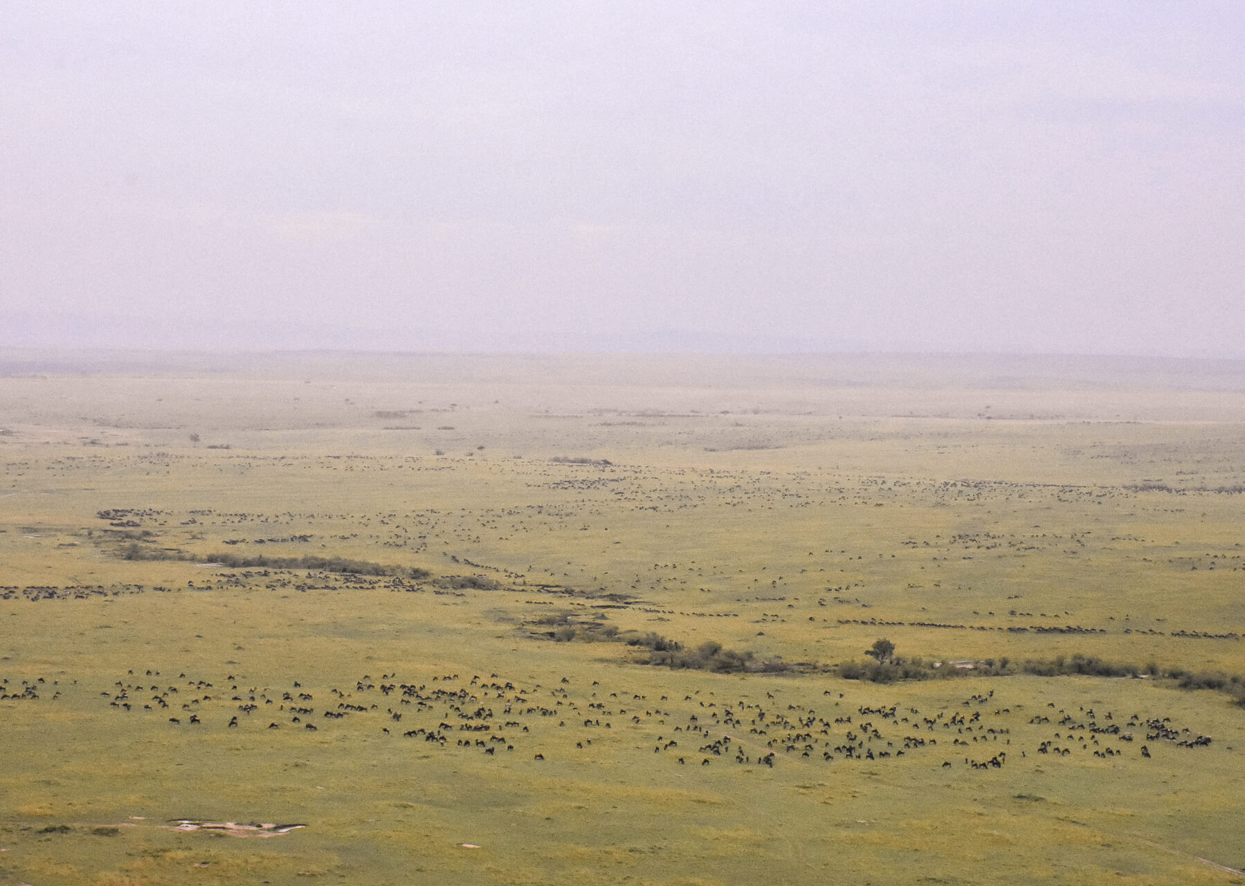 Overlooking the savanna with thousands of tiny wildebeest scattered across the plains