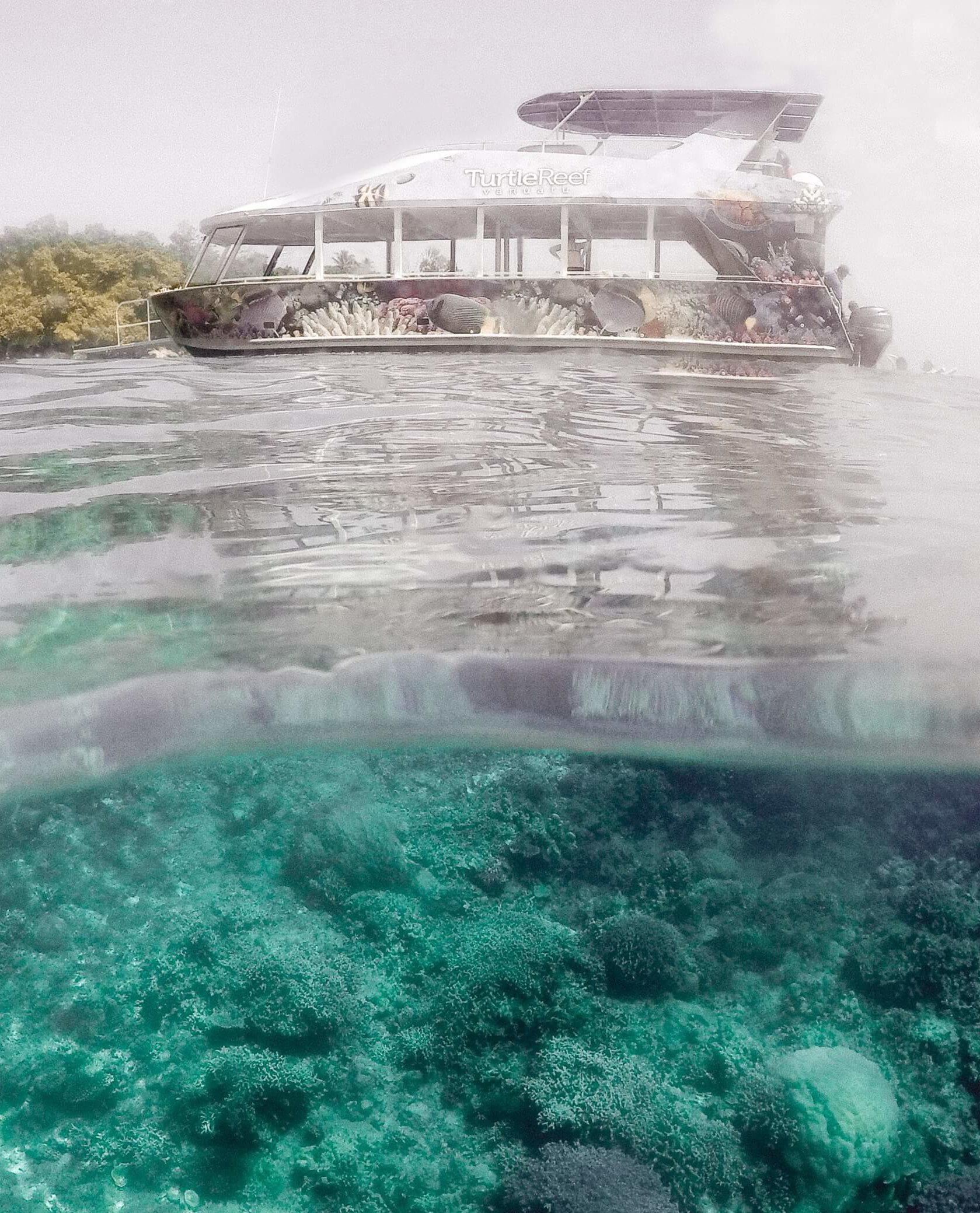 Turtle reef cruise boat sailing on the water, half photo with underwater view