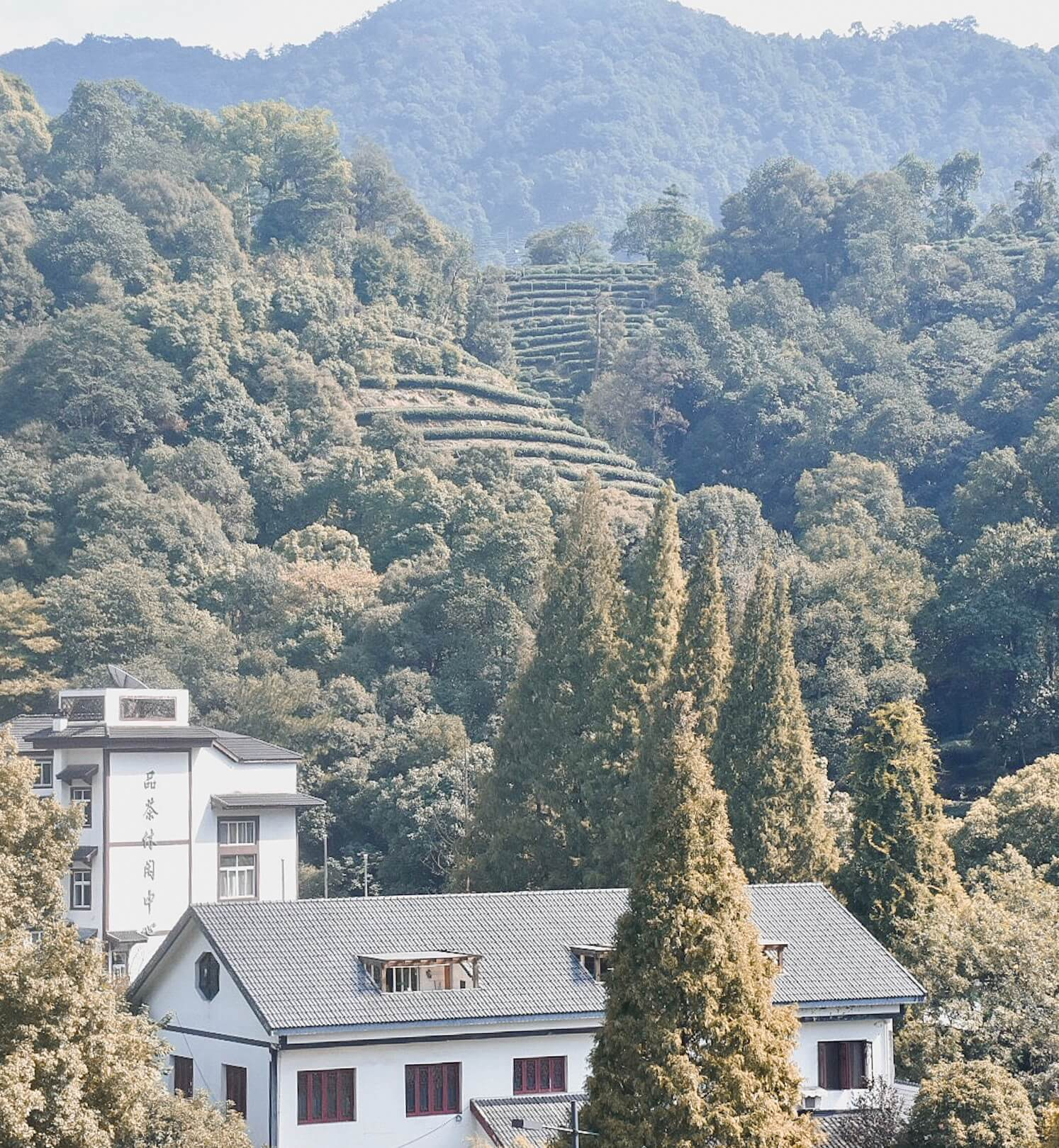Overlooking the rolling hills and tea plantations of Hangzhou