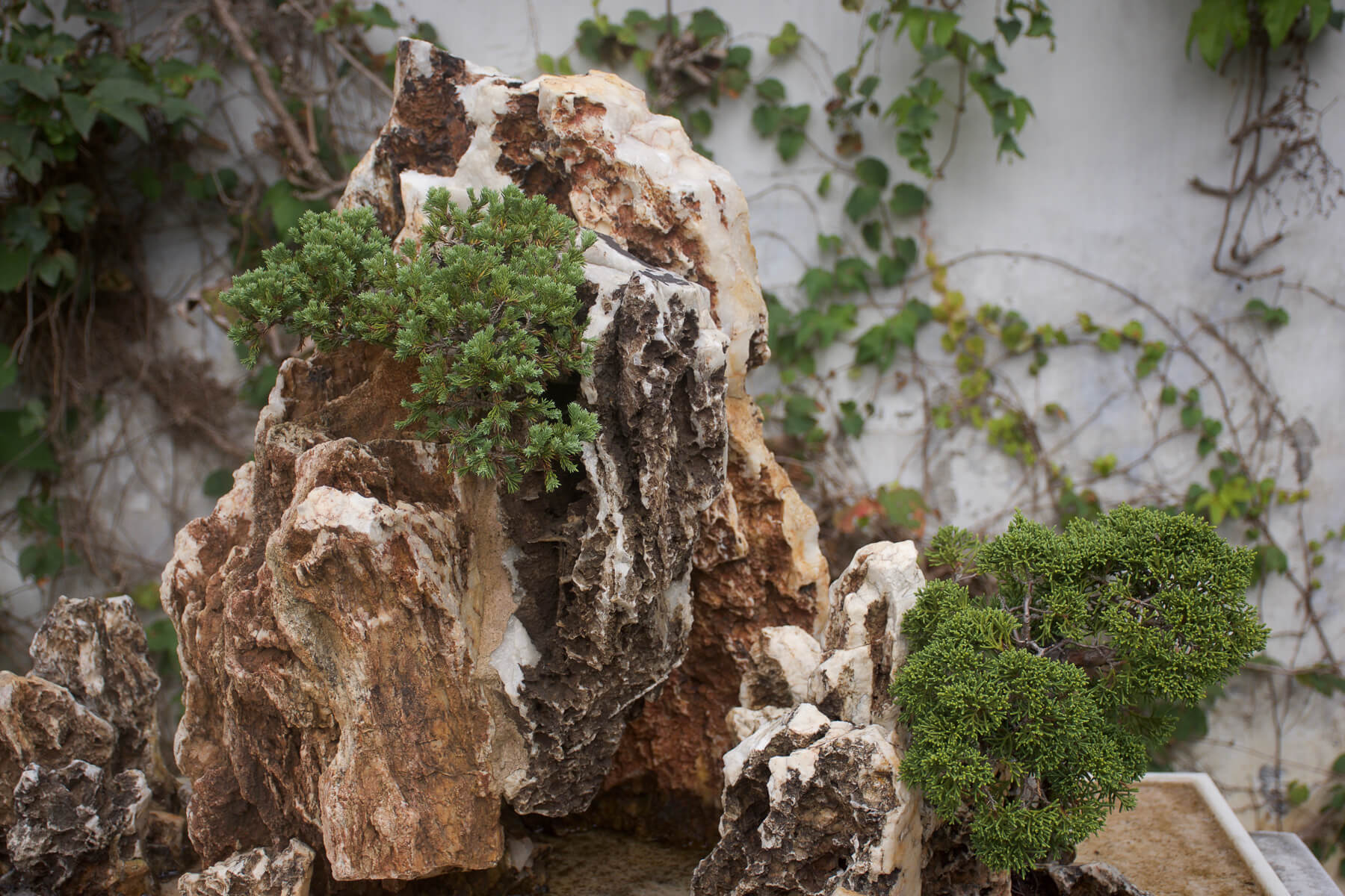 A close up shot of a rocks and Bonsai Tree