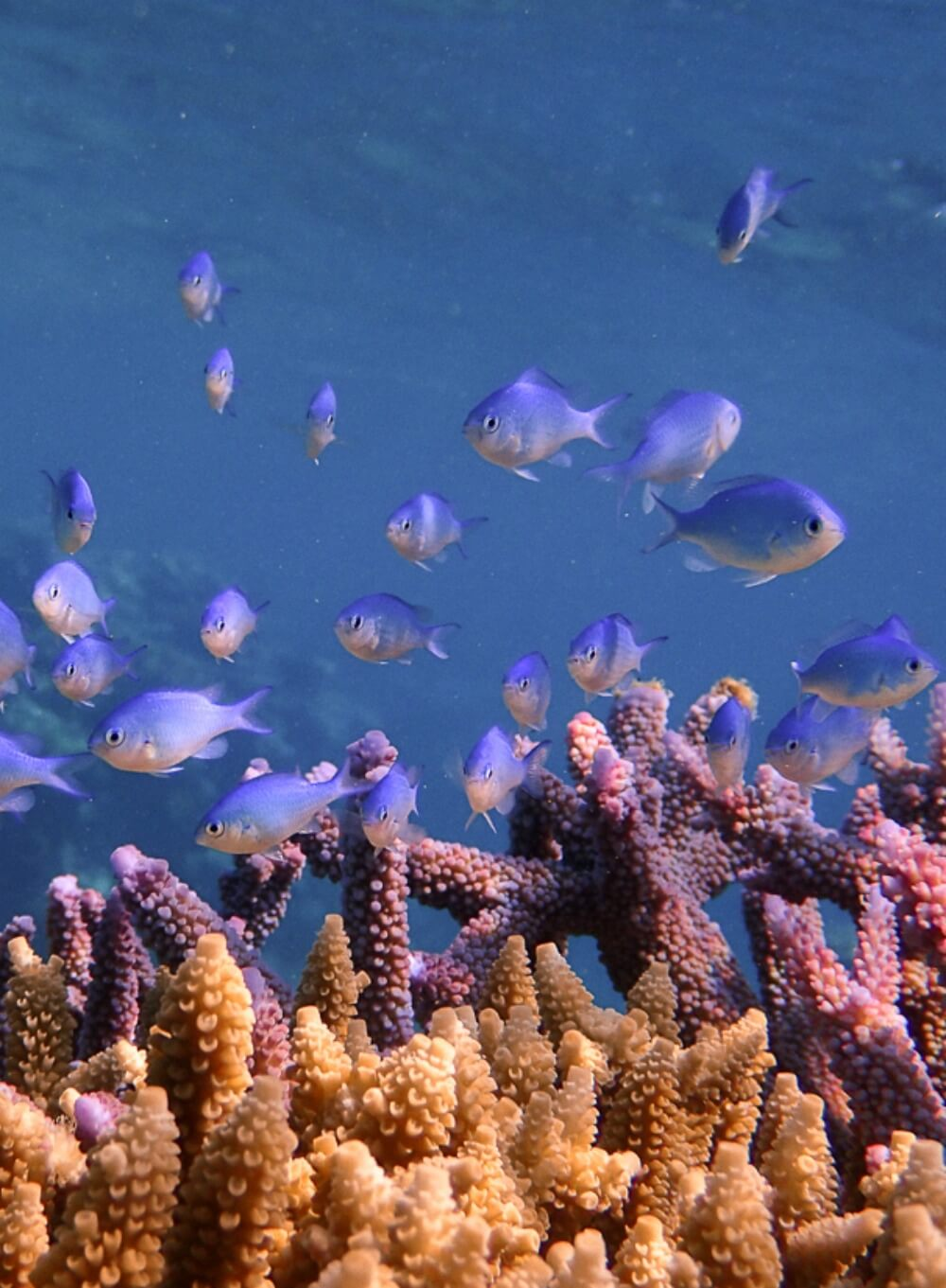 SNORKELLING THE GREAT BARRIER REEF WITH WAVELENGTH