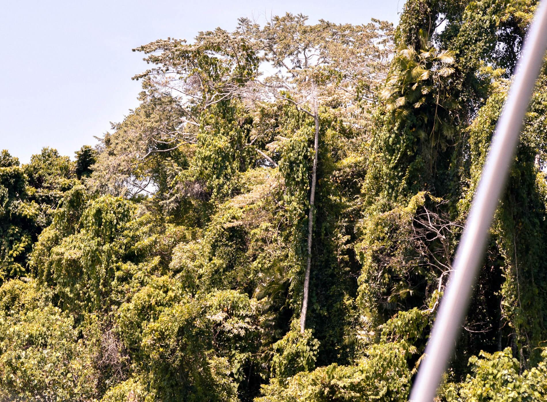 Rugged vegetation of the Daintree Rainforest - oldest rainforest in the world
