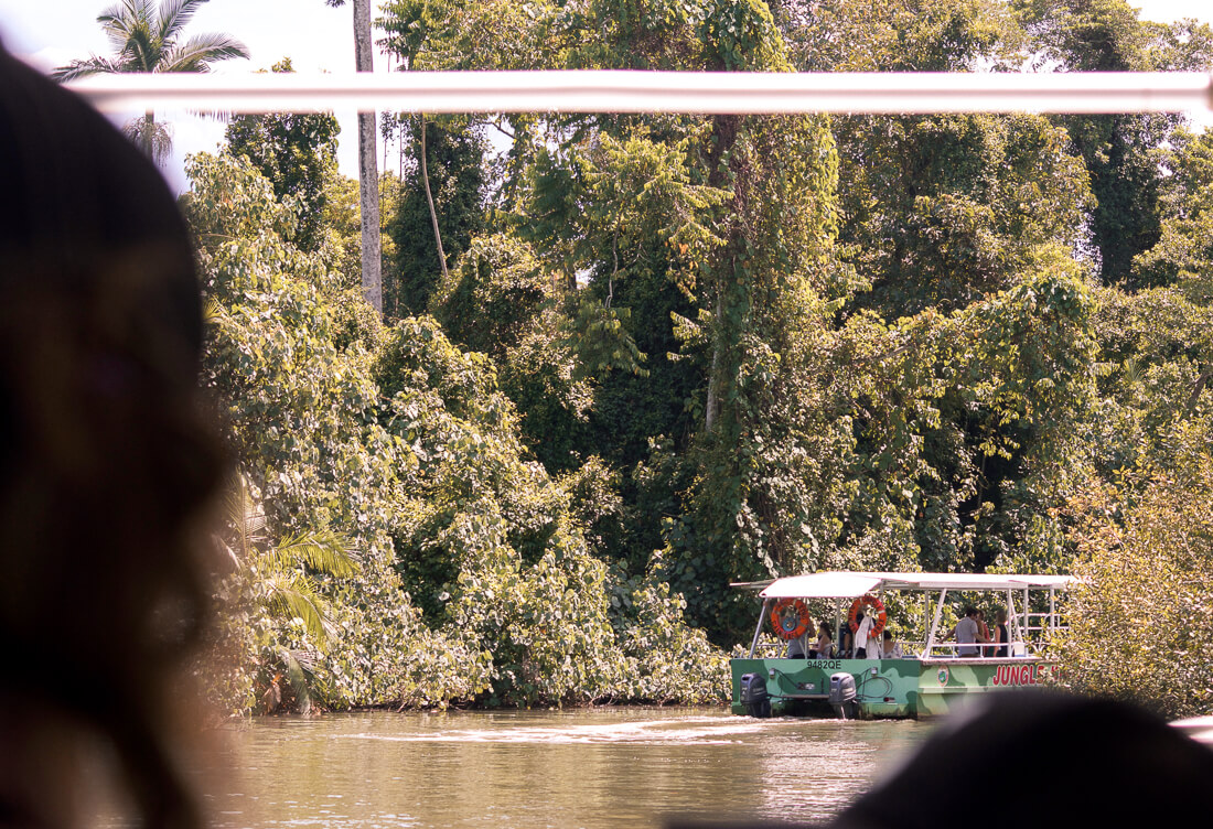 Crocodile cruise on the Daintree River