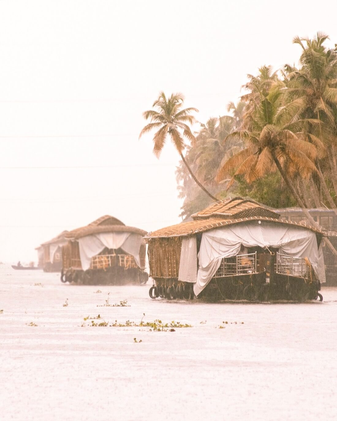 3 Allepey Houseboats cruising down the lake alongside Palm Trees