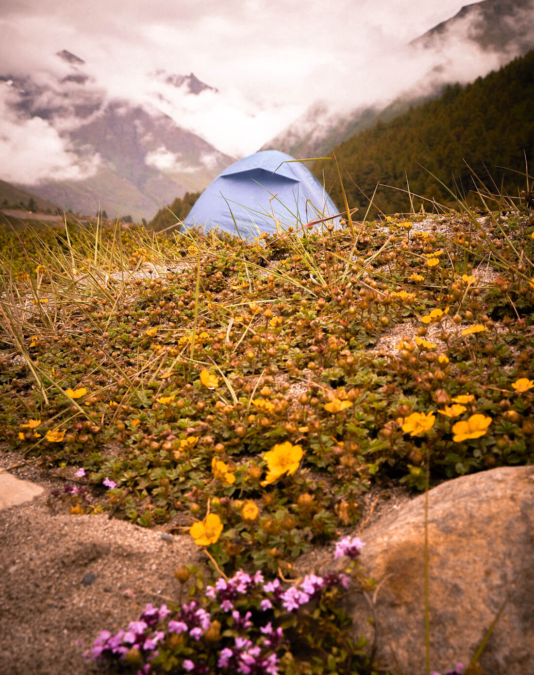 Blue tent set up in the mountains surrounded by wild flowers