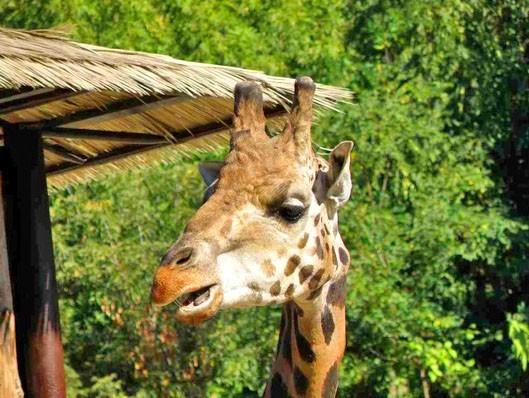 Image result for bratislava zoo
