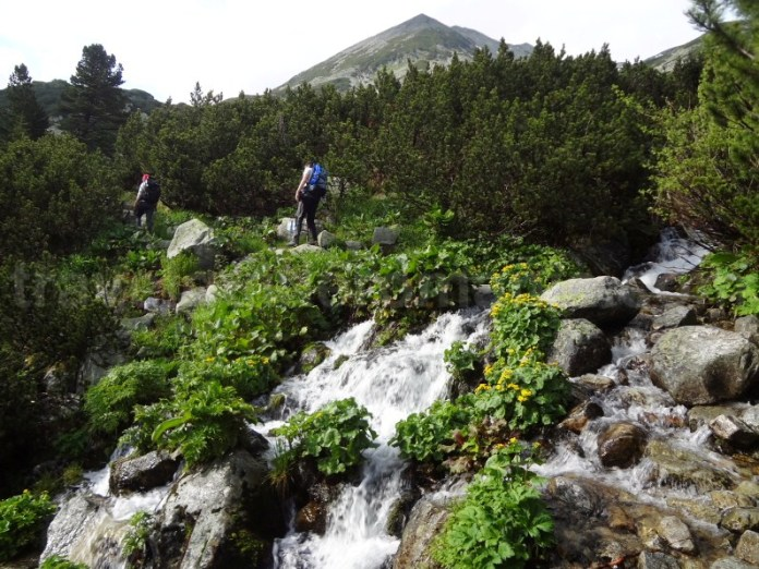Traseul turistic dintre Poiana Pelegii si Lacul Bucura