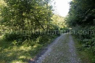 Drumul de acces spre Valea Marii - Muntii Retezat