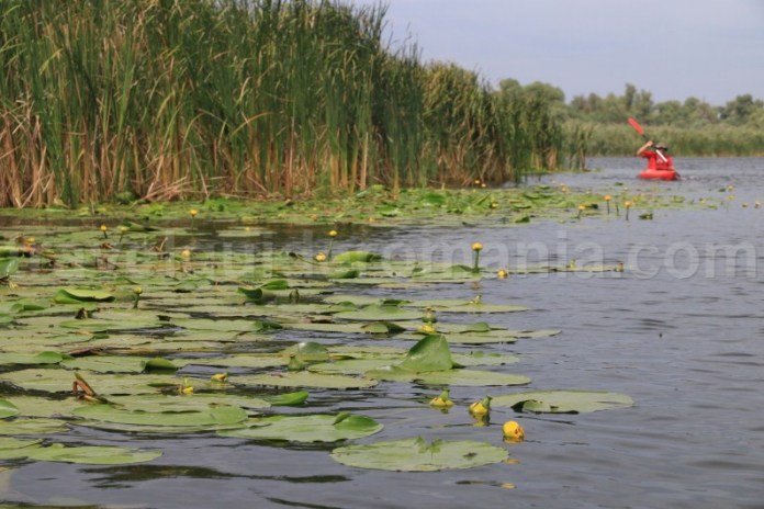 ce-poti-vizita-in-delta-dunarii-canalul-sontea-cu-caiacul