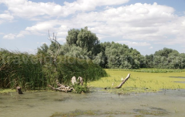 delta-dunarii-paradisul-pasarilor