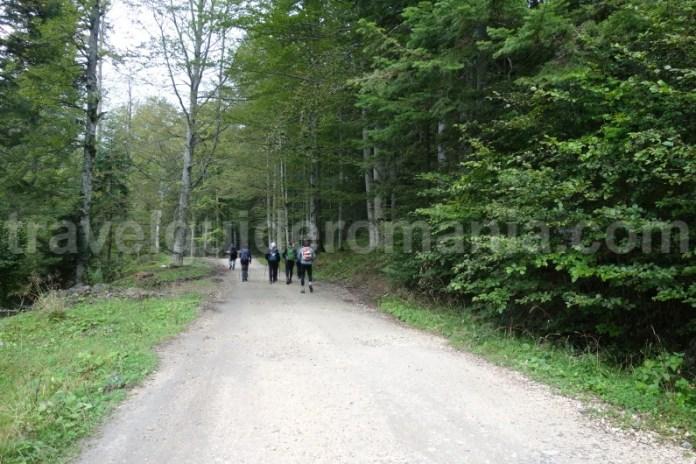 Urcarea spre cabana Diham - muntii Bucegi