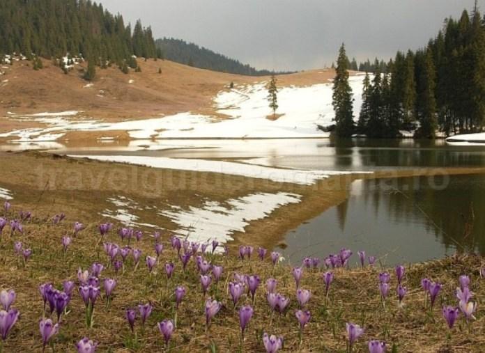 Lac in Poiana Ponor Padis Apuseni