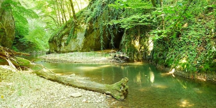 cheile videi Padurea Craiului Apuseni