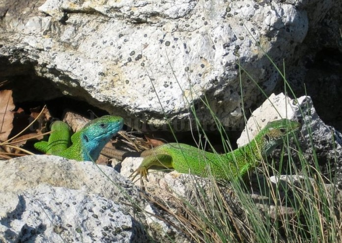 parcul natural portile de fier defileul dunarii traseu trescovat guster
