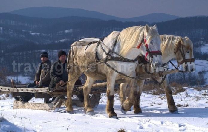 zece-hotare-traditional-Padurea-Craiului-Apuseni