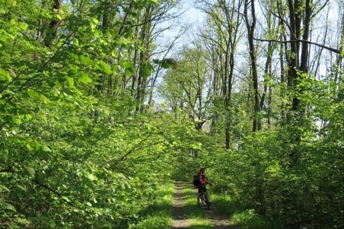 Destinaţia ecoturistică Mara–Cosău–Creasta Cocoșului-Maramureş-bicicleta-Pădurea Crăiască