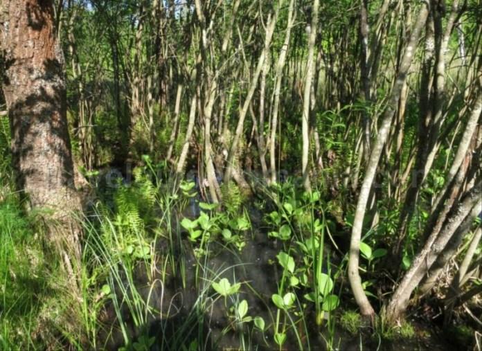 Destinaţia ecoturistică Mara Cosău Creasta Cocoșului Maramureş taurile hoteni