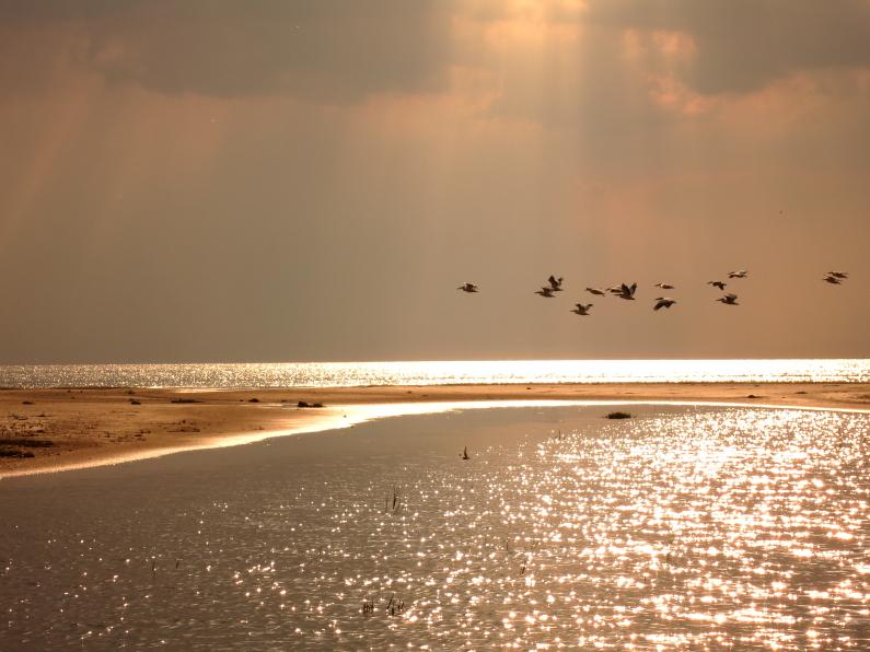 Delta Dunării,paduri subtropicale, dune de nisip Letea