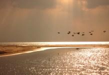 rezervatia biosferei delta dunarii pelicani sacalin