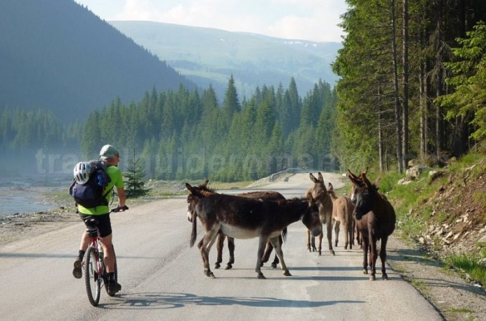 muntii latoritei transalpina mountain-biking