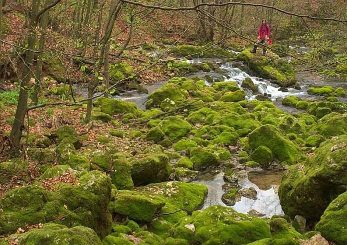 Pădurea Craiului izbucul Roșia