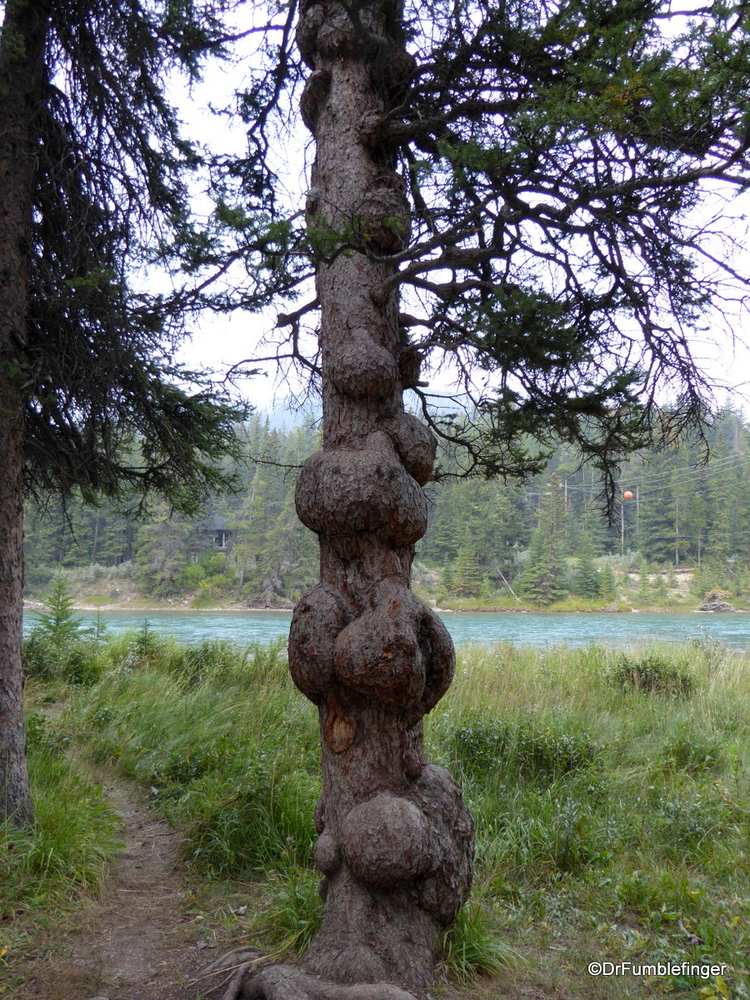 How To Find Burls