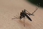 Mosquitoes can spread disease