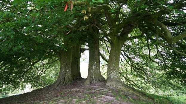 jrr tolkien's trees