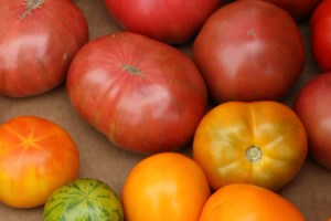 Middlebury Farmers' Market: Tomatoes from Elmer Farm