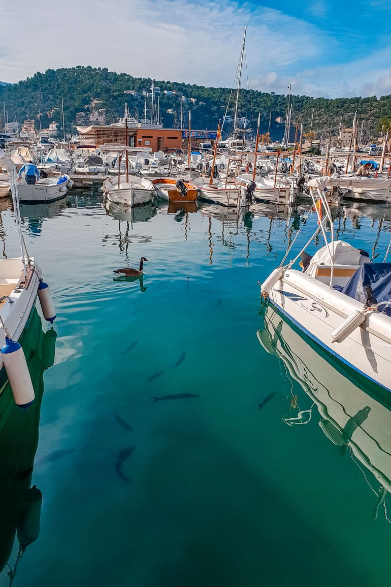 Fish at Soller Port Mallorca