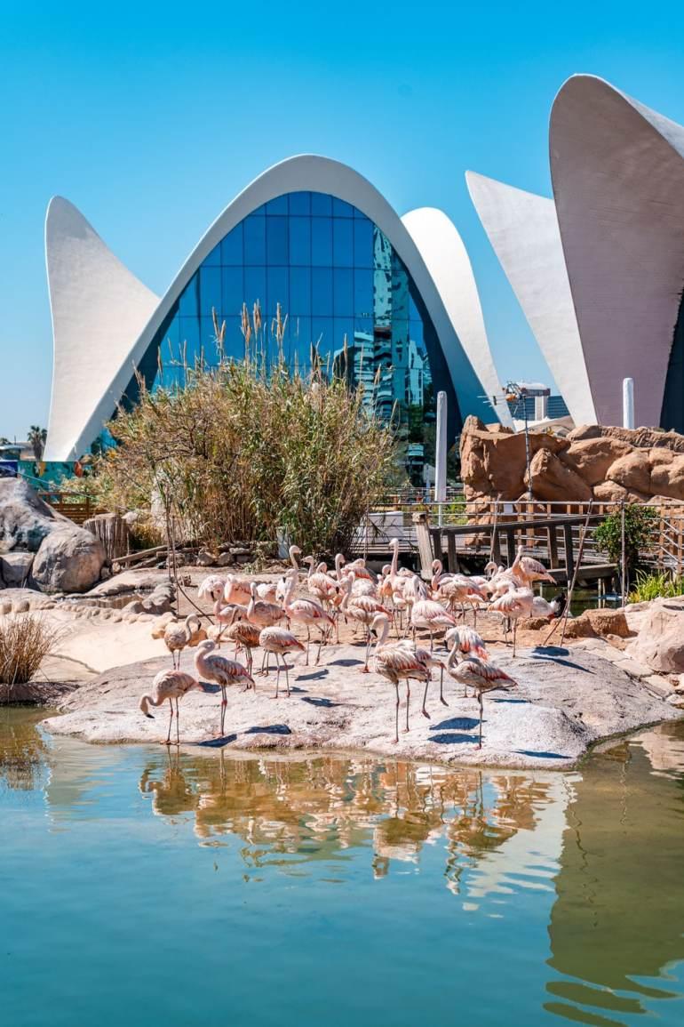 Flamingos at Oceanografic Valencia