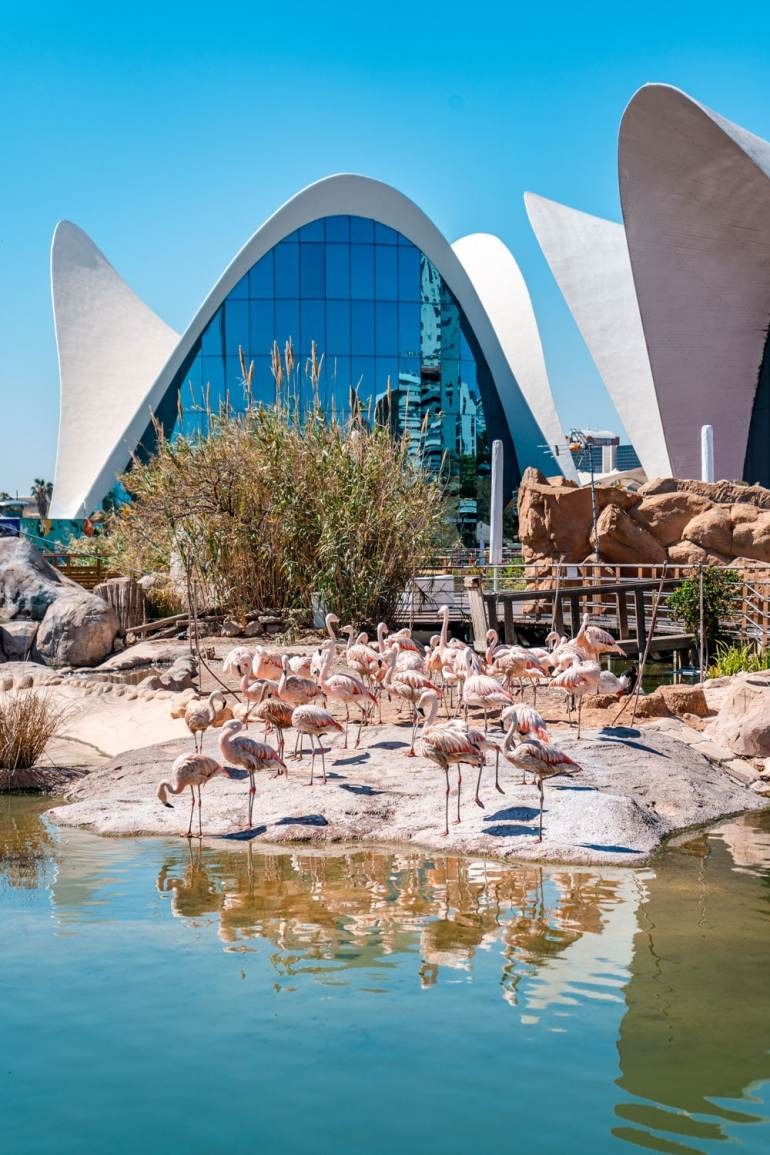 Flamingos at Oceanografic Valencia