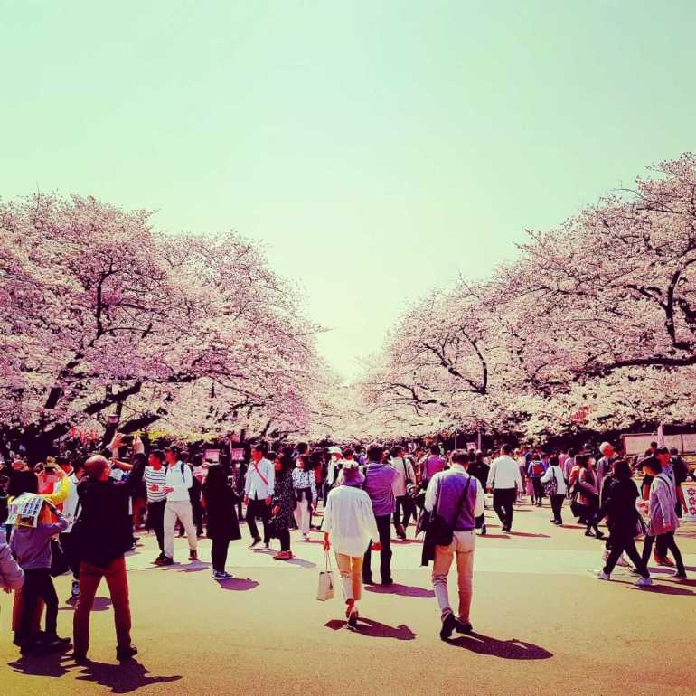 Cherry Blossom season is the best time to visit Ueno Park. Try the street food at Shinobazu Pond while you are there.