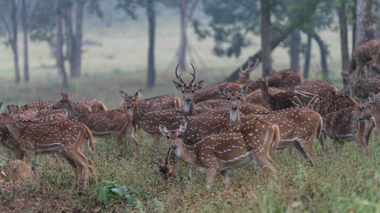 Places in South India - Kanha National Park